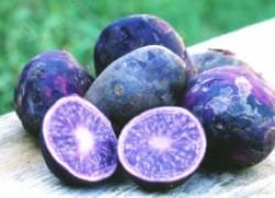 Фиолетовая новинка для российского огородника