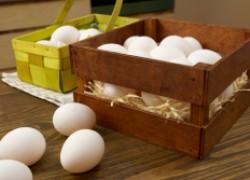 Что нужно знать про яйца: 10 секретов хозяйкам