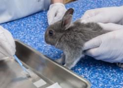 Защитите кроликов от миксоматоза