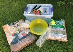Начало июня: пора заняться зеленым черенкованием
