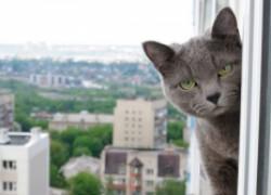 Осторожно: кошки летят из окон