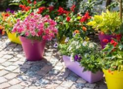 Как ухаживать за контейнерными растениями летом