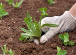 Ищем пользу от сорняков