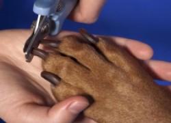 Не забывайте стричь когти собаке