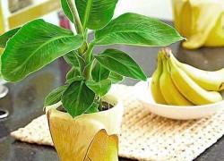 Мне подарили банан: буду выращивать