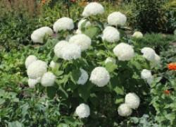 Заработать на выращивании растений: это легко?