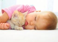 Дети и животные в доме