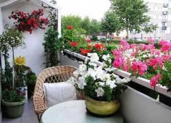 Тенистый балкон: что посадить, чем озеленить?