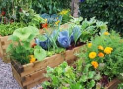 Спасут ли огород препараты из аптеки?