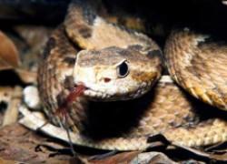 Неравная схватка ребенка со змеей