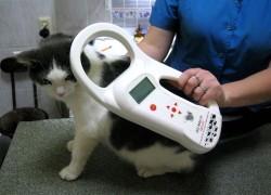 Закон о чипизации домашних животных