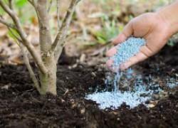 Фосфорные удобрения – залог богатого урожая
