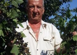 Советы по посадке, уходу и формированию кустов черной смородины от Вячеслава Сухова