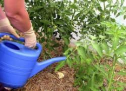 Чем и как подкармливать овощи