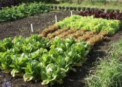 Поможет ли растениям нашатырный спирт?
