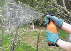 Стандартные схемы опрыскивания плодовых культур