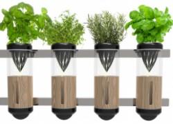 Посев растений в квартире: главные особенности