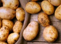 Как выращивают картошку в Финляндии