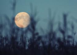 Лунно-посевной календарь садовода-огородника на август 2018 года