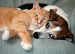 Лук и чеснок – смертельный яд для собак и кошек