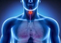 Мал золотник да дорог: за что отвечает щитовидная железа