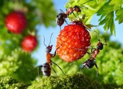 Великий воин избавит от муравьев раз и навсегда