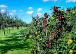 Краткий определитель основных болезней сада
