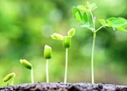 Сажать или не сажать новые растения вместо выкорчеванных