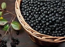 Приготовление вина из аронии (черноплодной рябины)
