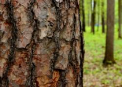 Как защитить кору деревьев от грызунов