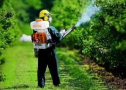 Самые опасные болезни вашего сада