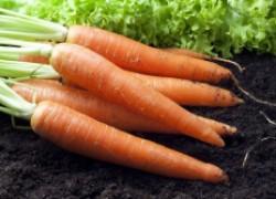 Секреты богатого урожая моркови