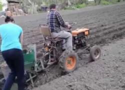 Вырастить озимую картошку реально?