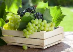 Что делать, если лопаются ягоды винограда