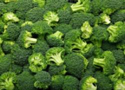 Сорта брокколи – на любой вкус