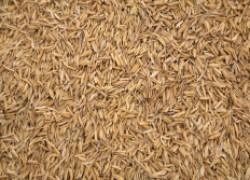 Что делать с рисовой шелухой на картошке