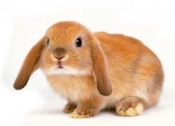 Как помочь заболевшему кролику