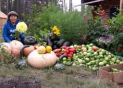 Солнышки в моем дворе