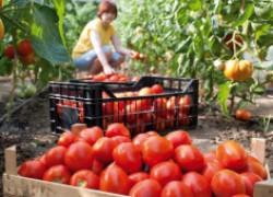 Что делать, если овощи зажировали