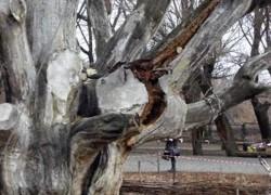 Почему гибнет дерево