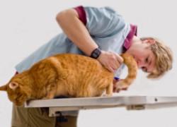 Кошачий цистит без причины
