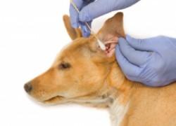 Домашняя мазь для заживления ран у животных