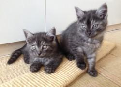 Невоспитанные котята