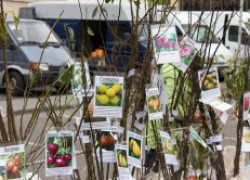 Осторожно: у садоводов началась эпидемия, или как распознать афериста – продавца саженцев