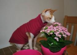 Что делать, если кошка ест цветы?