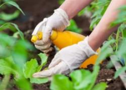 Лучшие биопрепараты идут на войну против вредителей