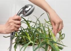 Зачем купать цветы под горячим душем