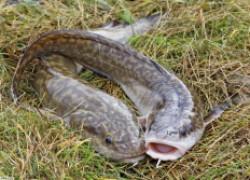 Осенняя рыбалка, или как поймать налима