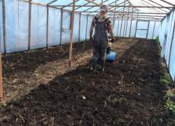 Менять ли почву в теплице