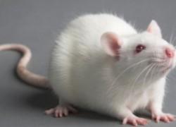 Приятный способ избавления от мышей
